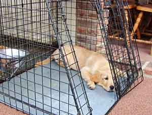 Border Collie and Golden Retriever Advice buying a dog crate