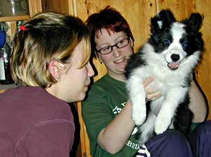 Border Collie puppy having fun with Marie and Pernilla