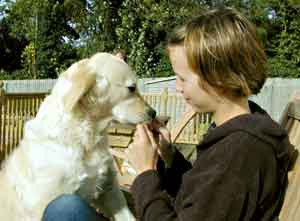 Au Pair Dog Carers Golden Retriever Magic with Marie