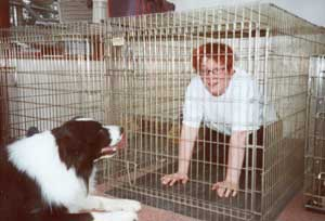 Border Collie and Golden Retriever Advice how to use a dog crate, cage or indoor kennel