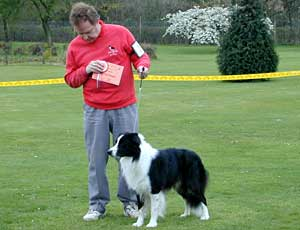 dog showing - Border Collies