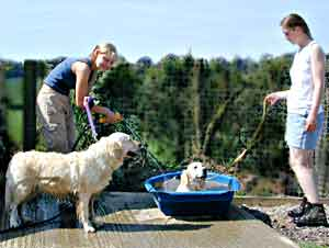 Dog Carer Au Pairs Golden Retrievers Magic and Wanda being cooled down with a hose by Johanna and Maria